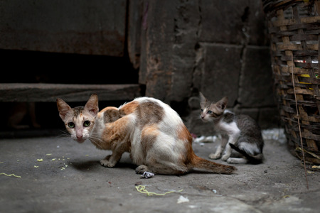 vagrant: Vagrant cats. Homeless wild cats on dirty street in Asia