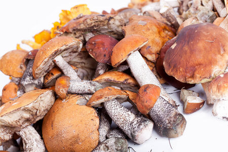 Collection of delicious edible mushrooms from russian forest photo