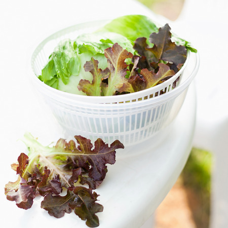 Salad spinner with iceberg and red lettuce, diet concept photo