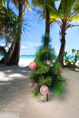 Christmas tree on beach. New year concept. photo