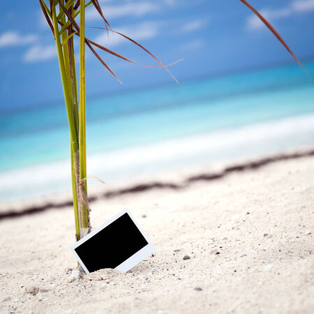 recollections: Empty photo card on sandy beach near young palm tree. Memory Travel Concept