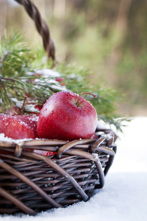 Basket with red apples decorated fir branch, snow-covered in nature winter forest photo
