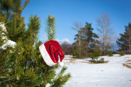Santa Claus losted his hat on fir trees branch, Christmas in winter nature, outside photo