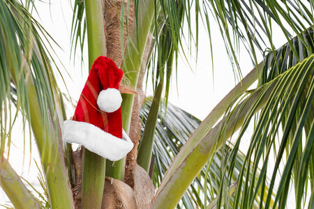 Santa Claus Hat on coconut palm tree. Holiday concept Stock Photo