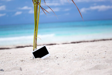 memoir: Empty photo card on sandy beach near young palm tree. Memory Travel Concept