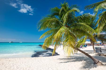 Coconut palm on caribbean beach, Cancun, Mexico 스톡 콘텐츠