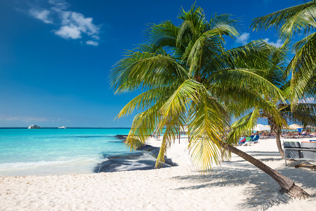 cancun: Coconut palm on caribbean beach, Cancun, Mexico Stock Photo