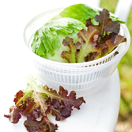 spinner: Salad spinner with iceberg and red lettuce, diet concept Stock Photo