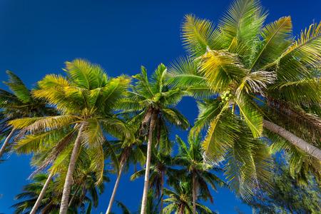 boracay: Coconut palm trees on blue sky background, Philippines, Boracay Stock Photo