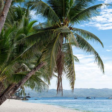 boracay: Tropical beach with beautiful palms and white sand, Philippines, Boracay Island Stock Photo