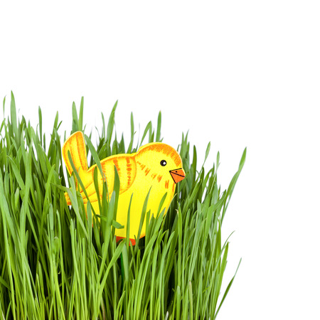 hick: Сhick toy in green grass, closeup on white background