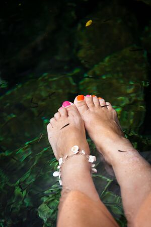 fish spa: Fish spa therapy with female legs in mexican cenotes