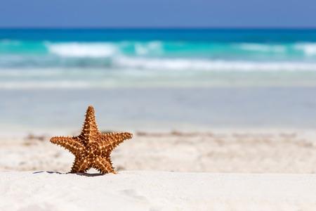 verano: Estrellas de mar en la playa de arena del caribe, el concepto de viaje