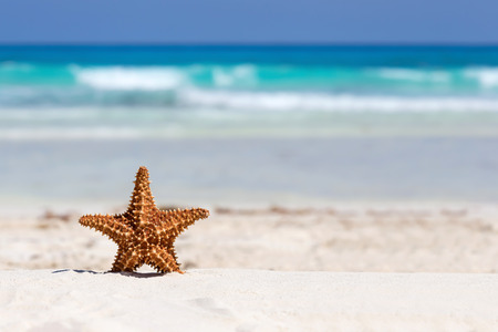 Starfish on caribbean sandy beach, travel concept Banque d'images