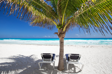 beachfront: Two beach beds under palm tree on caribbean beachfront