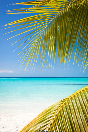mujeres: Tropical white sand beach with coconut palm trees, seaview. Mexico, Isla Mujeres. Stock Photo