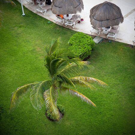 sun umbrellas: Luxury hotel area with palm trees, sun umbrellas and sunbeds. Caribbean vacation