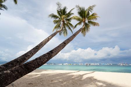 Coconut palms on tropical sandy beach