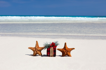 christmas concept: Tropical celebration on beach, two starfishes and present box closeup