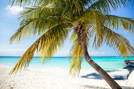 Tropical white sand beach with coconut palm trees, seaview. Mexico, Isla Mujeres. Stock Photo