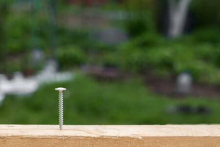 screwed: Screw screwed into wooden plank, outdoors at the garden