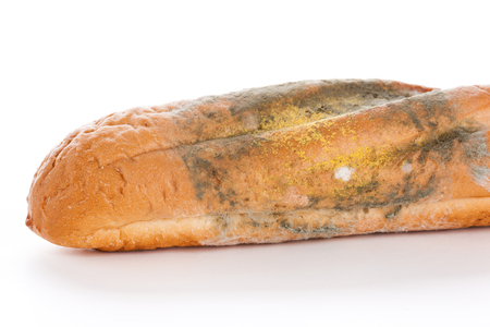 lengthy: Mold On Bread, closeup on white background. Nobody