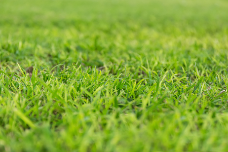 shallow: Grass background. Shallow depth Stock Photo