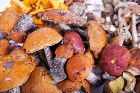mushrooming: Collection of delicious edible mushrooms from russian forest Stock Photo