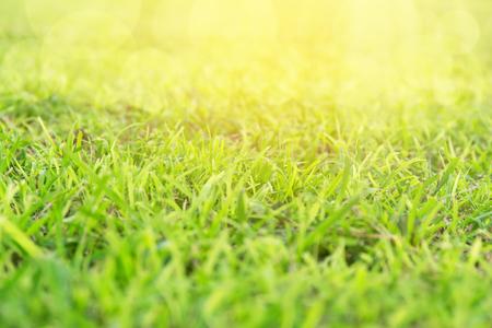 dof: Grass background. Macro shot. DOF