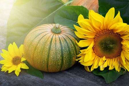 Fresh pumpkins decorated  sun flower on wooden table, close up