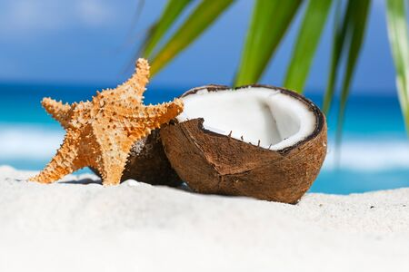 star fish: Brown coconuts and star fish on white sandy beach with turquoise sea background, close up
