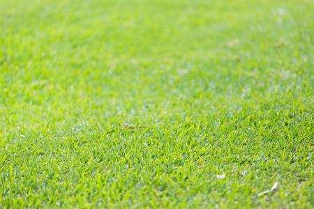 Grass background. Macro shot. DOF