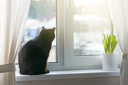 Black cat sitting on window sill against sunlight and looking outside Imagens