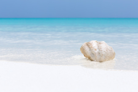 White sea shell in pristine maldives beach with turquoise sea and deep blue sky, travel card with copy space for your text