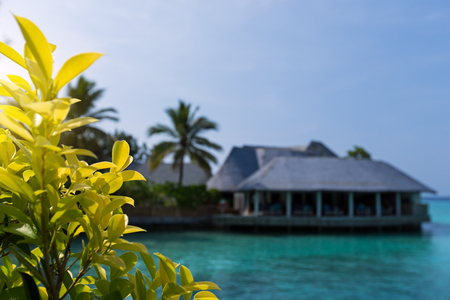 Maldivian wooden bungalows with crystal turquoise water on tropical island with coconut palms 스톡 콘텐츠