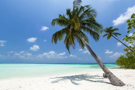 金浜ココナッツ椰子の木。旅行目的地カード、モルディブの島の完全な逃走