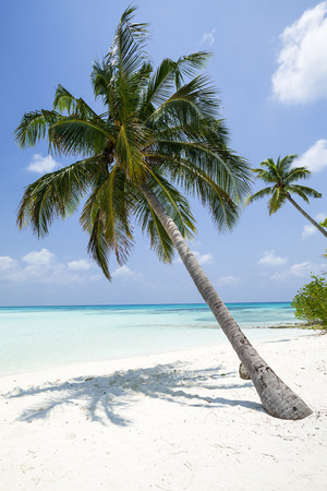 Coconut palm tree with bounty beach. Travel destination card, perfect getaway to Maldives island Stock fotó