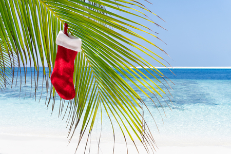 Christmas stocking hanging on coconut palm tree leaf at tropical sandy beach. New Year celebration on seashore