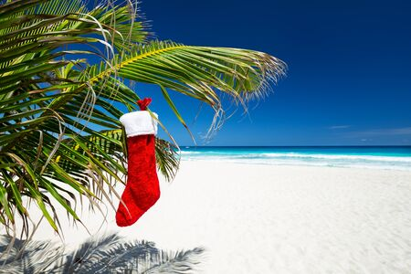 Christmas stocking hanging on coconut palm tree leaf at tropical sandy beach. New Year celebration Stock Photo