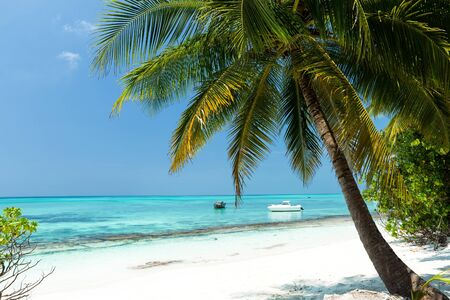 Coconut palm trees on seaside, tropical nature with bounty beach and azure sea, travel destinations.  Stock Photo