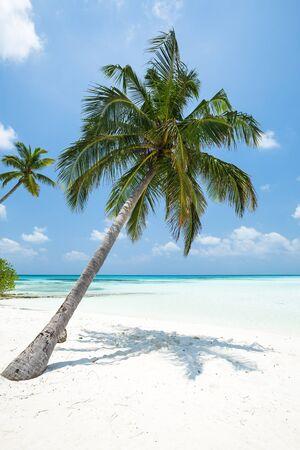 Coconut palm tree with bounty beach. Travel destination card, perfect getaway to Maldives island Stock Photo