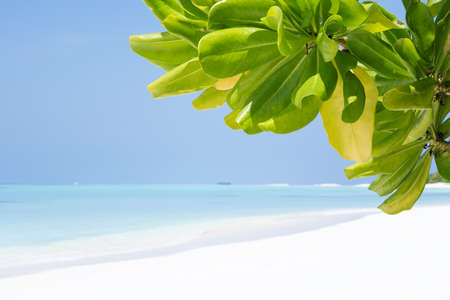 Tropical tree leaves with bounty beach. Travel destination card, perfect getaway to Maldives island Stock Photo