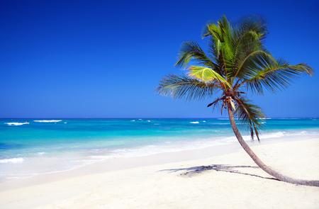 Tropical pristine beach with coconut palm, Dominican Republic travel destination