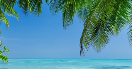 Coconut palm trees on seaside, tropical nature with bounty beach and azure sea, travel destinations, long banner