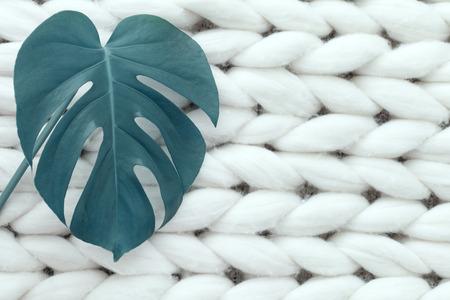 Monstera leaf on merino plaid texture background, toned image Stock Photo