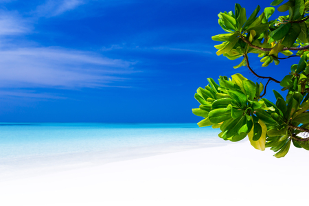 Beautiful nature and white sandy beach on Maldives island, perfect getaway for your vacations Stock Photo