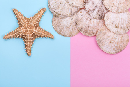 Starfish and seashell on pastel colored paper texture, flat lay