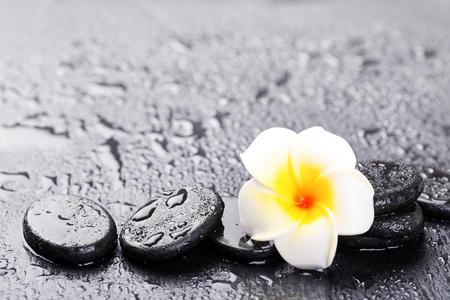 Plumeria flower and stones on wet black rock background. Spa concept