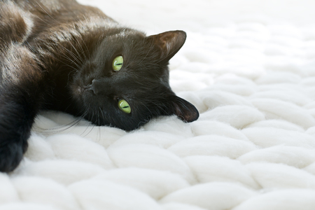 Black cat relaxing on white knitted merino plaid, enjoying warm and soft super chunky yarn blanket, cozy home and hygge trendy concept, scandinavian style
