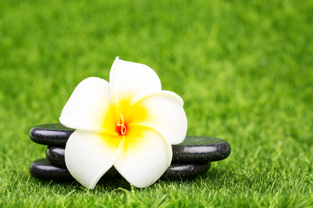 Plumeria flower and black stones on green grass background. Spa concept Stock Photo